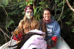 Bald Eagle Rescue Efforts