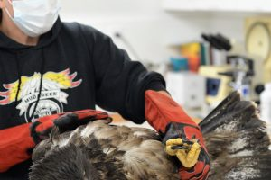 Coronavirus pandemic sees rise in pet adoptions, animal rescues